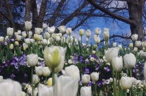 Corbett Gardens, Bowral NSW Australia ©JoyLovesParis